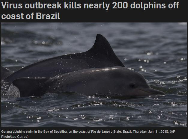 Virus outbreak kills Guiana Dolphins on the Rio de Janeiro State Brazil