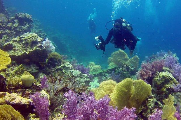 Kasetsart University said 77% or 140,000 out of total 107,800 rai of coral reef area in the Thai seas is dying and in a sorry state.